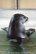 mediterranean monk seal diet