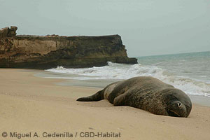 med. monk seal