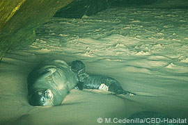 Cabo Blanco colony breeding cave