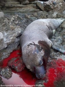 Rhodes seal killing