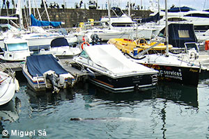 """Half"" resting in the sea at the Funchal marina."