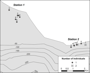 Figure 1. Seal sightings during the surveys (numbers above the marks represent the observation order).